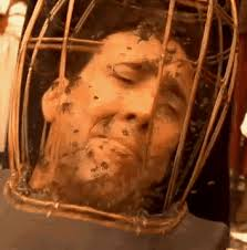 Cage Bees